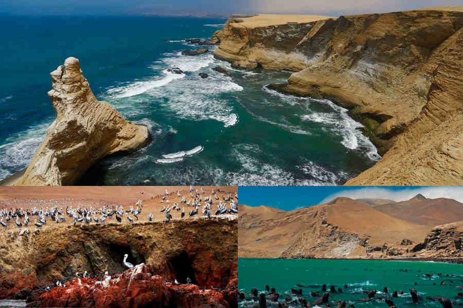 Paracas reserva nacional y turismo