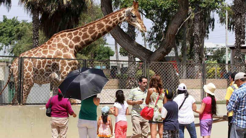 parque de las leyendas zoologico de Lima