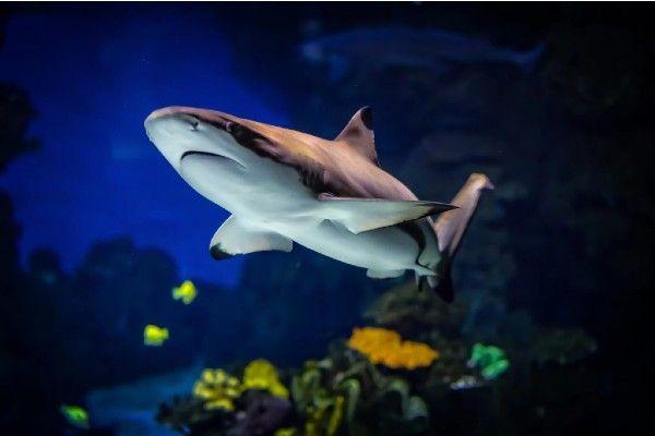 el acuario más grande de lima nautilus