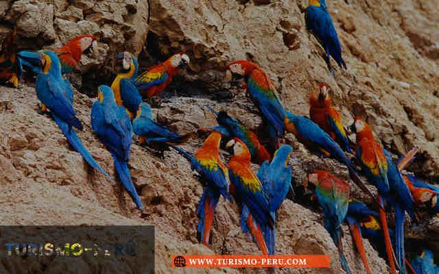lugares turisticos madre de dios peru