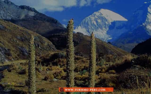 flora y fauna del cerro huascaran